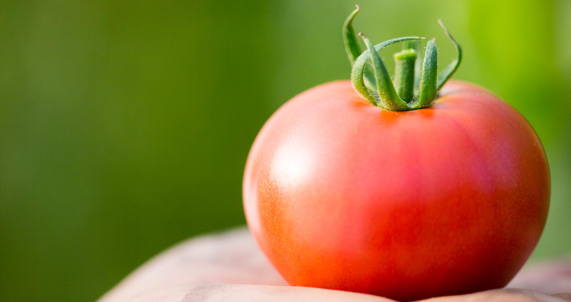 一番美味しいときに、一番いいものを 新門トマト農園 高糖度トマト新門トマト農園 FAXでのご予約